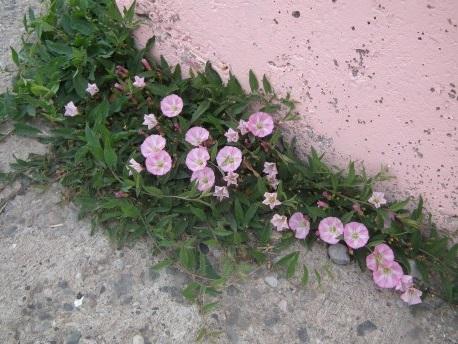 Daldan Dala Konan Çiçekler