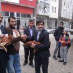 Akkuş'ta 10.000 Organik Yarka Tavuk Dağıtım Yapıldı