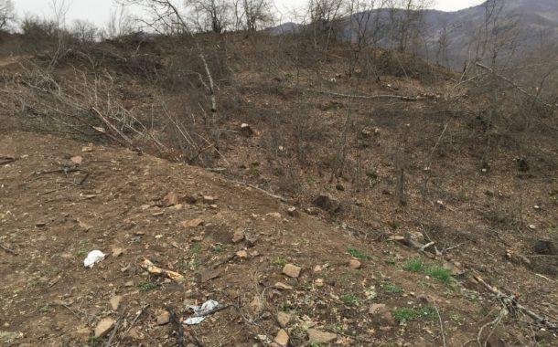 Akkuş Ormanları Odun İçin Sıradan Kesiliyor İşte Kanıtı